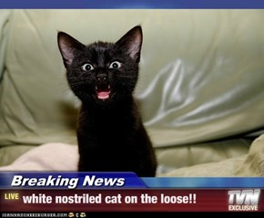 Breaking News - white nostriled cat on the loose!!
