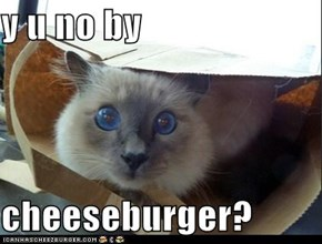 y u no by  cheeseburger?