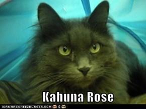 Kahuna Rose