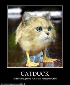 CATDUCK