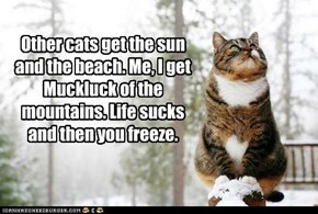 Other cats get the sun and the beach.