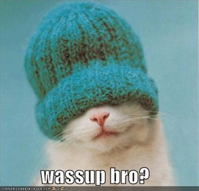 wassup bro?