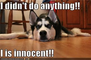 I didn't do anything!!  I is innocent!!