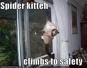 Spider kitteh