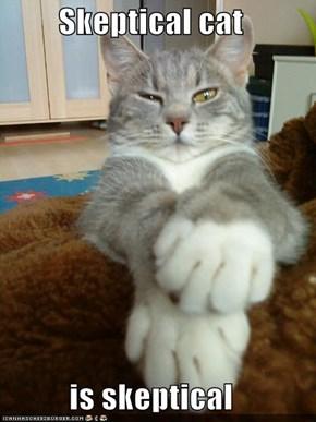 Skeptical cat  is skeptical