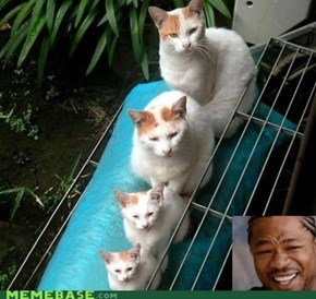 Yo Dawg, I Heard You Like Cats