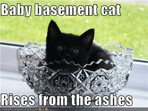 Baby basement cat