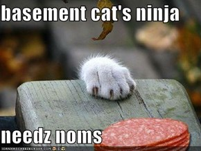 basement cat's ninja  needz noms