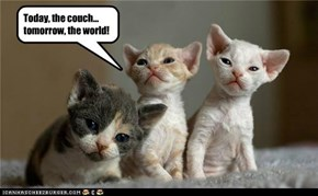 Today, the couch... tomorrow, the world!