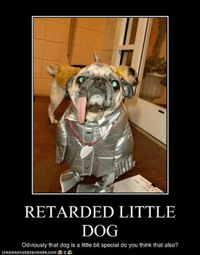 RETARDED LITTLE DOG