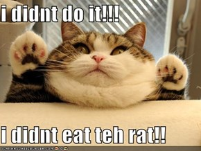 i didnt do it!!!  i didnt eat teh rat!!