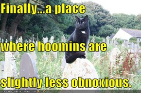 Finally...a place where hoomins are slightly less obnoxious.