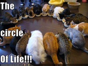 The circle Of Life!!!