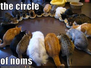 the circle   of noms