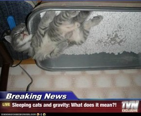Breaking News - Sleeping cats and gravity: What does it mean?!