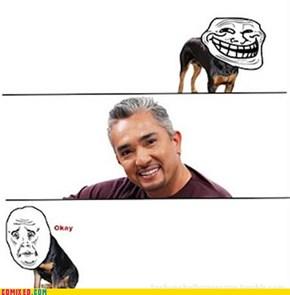 Problem, Dogs?