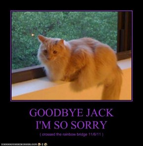 GOODBYE JACK  I'M SO SORRY
