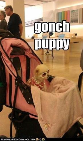 gonch puppy
