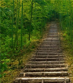 Forest Steps in Huangshan, China