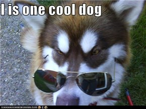 I is one cool dog