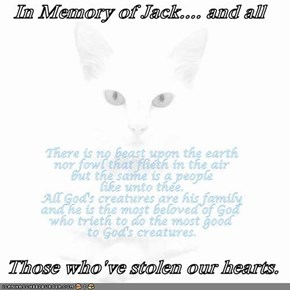 In Memory of Jack.... and all   Those who've stolen our hearts.