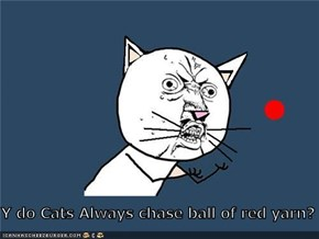 Y do Cats Always chase ball of red yarn?