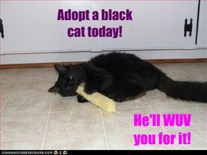 Adopt a black cat today!