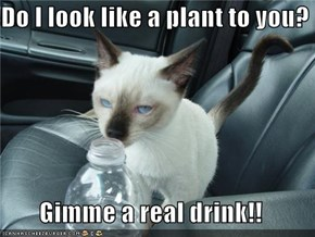 Do I look like a plant to you?  Gimme a real drink!!