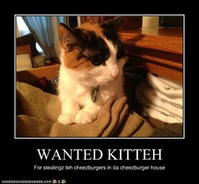 WANTED KITTEH