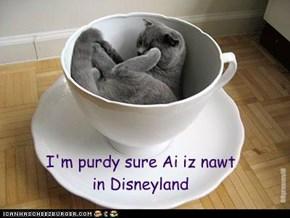 I'm purdy sure Ai iz nawtin Disneyland