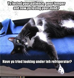 Have yu tried looking under teh refrigerator?