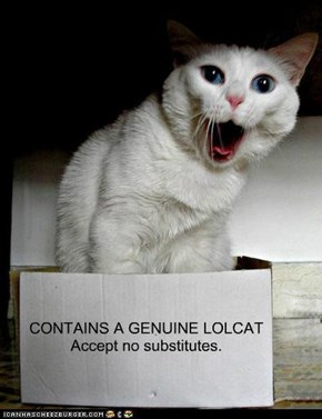 CONTAINS A GENUINE LOLCATAccept no substitutes.