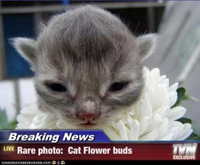 Breaking News - Rare photo:  Cat Flower buds
