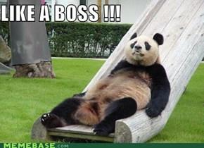 Like a boss .... Panda!