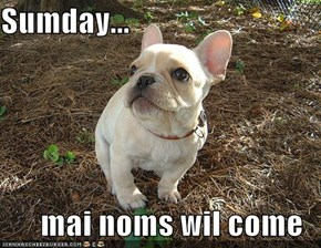 Sumday...  mai noms wil come