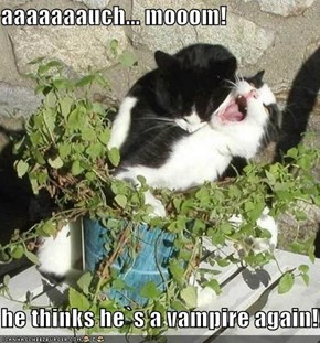 aaaaaaauch... mooom!  he thinks he`s a vampire again!!