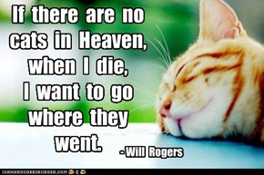 If  there  are  no  cats  in  Heaven,   when  I  die,  I  want  to  go  where  they  went.