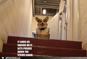 Corgis Will One Day Take Over the Planet
