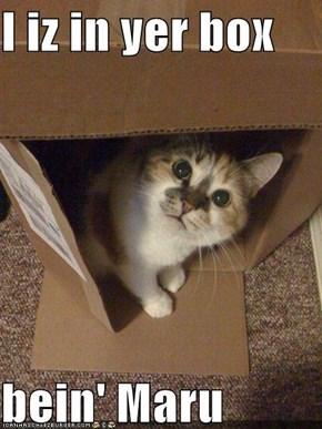 I iz in yer box  bein' Maru