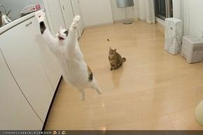 Jumping kitteh