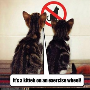 It's a kitteh on an exercise wheel!