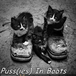 Puss(ies) In Boots