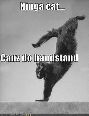 Ninga cat... Canz do handstand