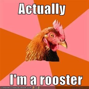 Actually  I'm a rooster