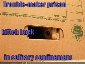 Trouble-maker prison  kitteh back    in solitary confinement