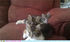 Cuddlebuddies