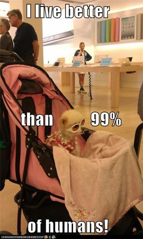 I live better        than           99% of humans!