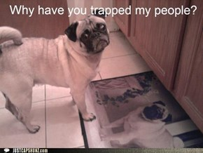 Pugs Are Not People. Pugs are Dogs.