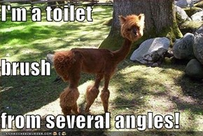 I'm a toilet  brush from several angles!