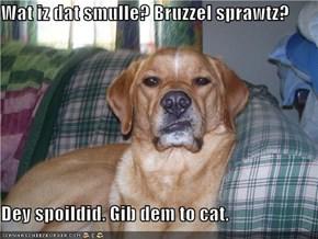 Wat iz dat smulle? Bruzzel sprawtz?   Dey spoildid. Gib dem to cat.